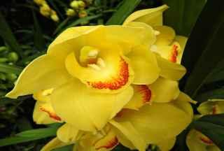 Foto 1 - orquídeas terrestres