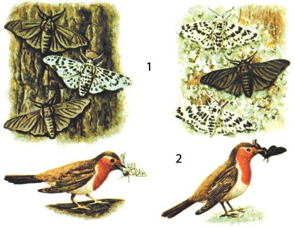Evrim Dersi 3: Doğal Seçilim - Yok Artık Bilim/Bilim Meraklıların Adresi