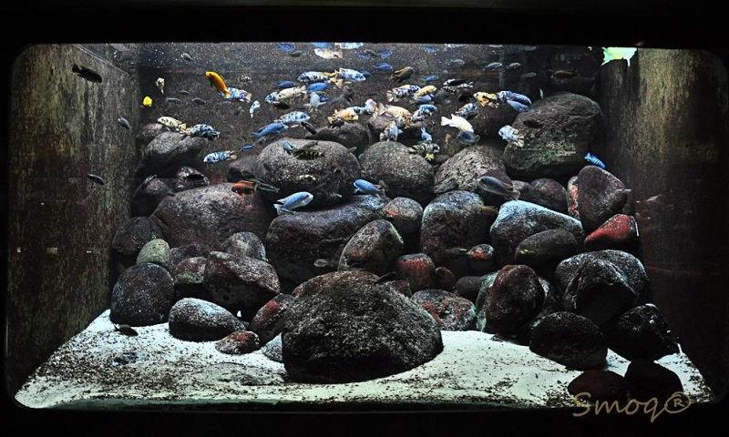 Gambar Aksesoris Aquarium Batu Hias Murah-Batu kali