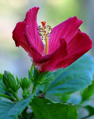 Pink Full HD flower
