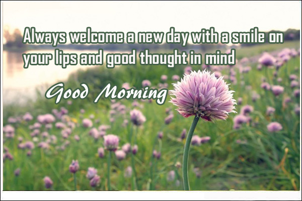 flowers good morning images with quotes