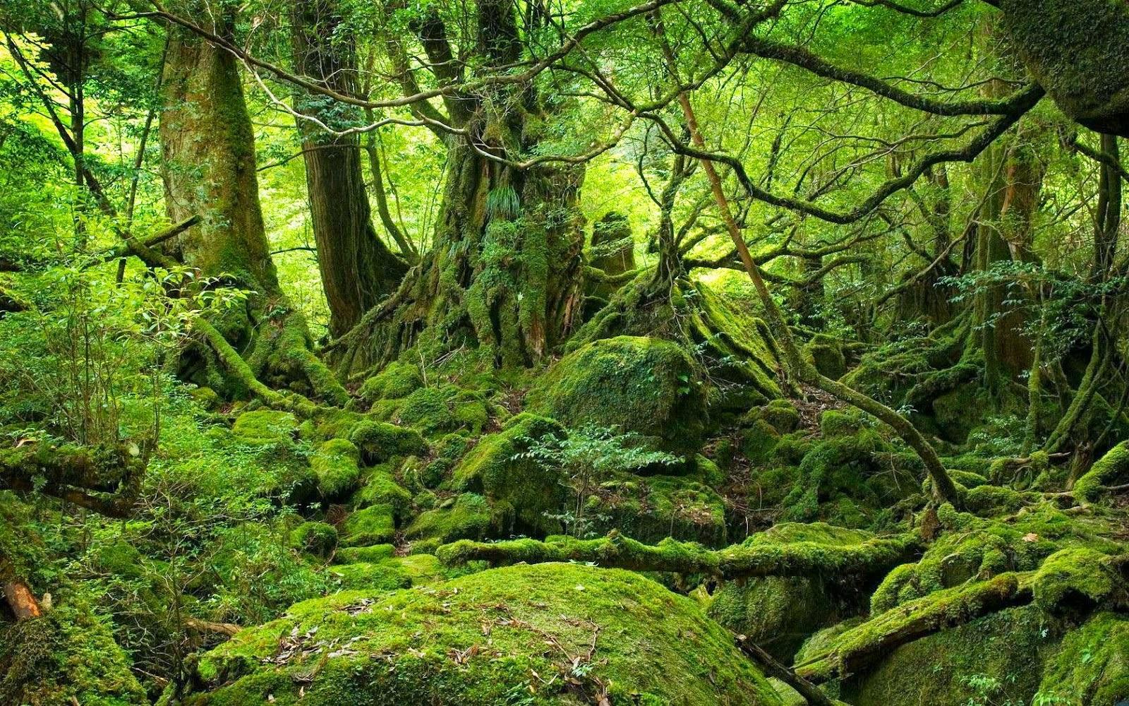 #Selva, Características das Selvas