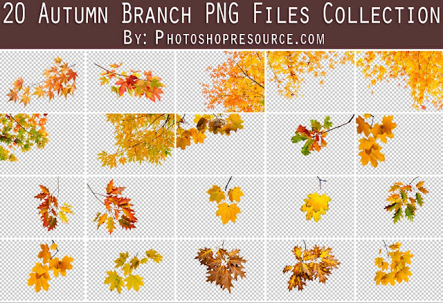 20 Autumn Branch PNG