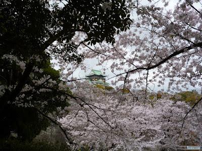 桜越しの大阪城