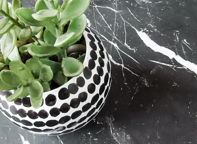 Easy Black And White Dollar Tree Succulent Vase Little House Of