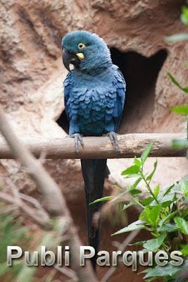 Loro Parque Fundación traslada 6 loros en peligro de extinción para su reinserción en su medio natural en Brasil