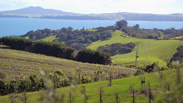 2 weeks in New Zealand: Explore the vineyards on Waiheke Island