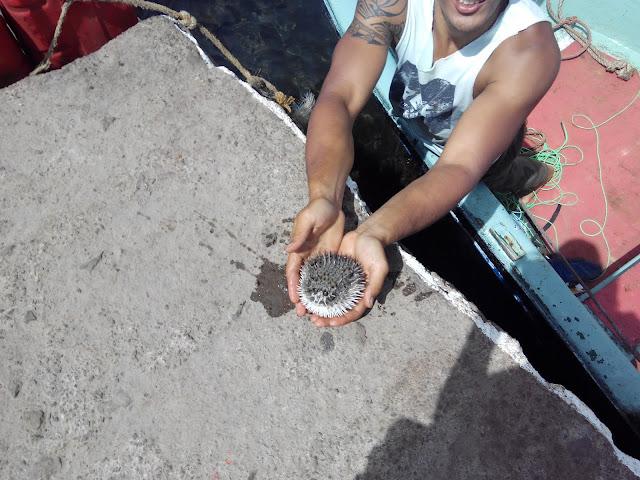 Pez globo en el puerto de Isla de Pascua