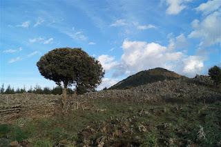 Monte Spagnolo