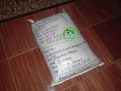 Benih Padi Pesanan  HARIS Bireuen, Aceh.  Benih Sesudah di Packing