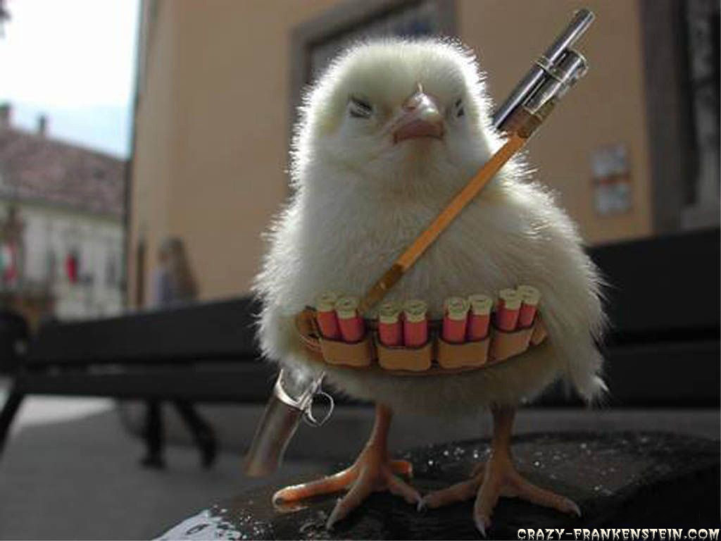 Funny Chicken: Best All Around Livestock Animal?