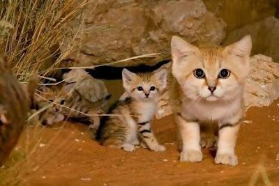 Jual Kucing Paling Kerdil di Dunia,  Harga Kucing Paling Kerdil di Dunia,  Toko Kucing Paling Kerdil di Dunia,  Diskon Kucing Paling Kerdil di Dunia,  Beli Kucing Paling Kerdil di Dunia,  Review Kucing Paling Kerdil di Dunia,  Promo Kucing Paling Kerdil di Dunia,  Spesifikasi Kucing Paling Kerdil di Dunia,  Kucing Paling Kerdil di Dunia Murah,  Kucing Paling Kerdil di Dunia Asli,  Kucing Paling Kerdil di Dunia Original,  Kucing Paling Kerdil di Dunia Jakarta,  Jenis Kucing Paling Kerdil di Dunia,  Budidaya Kucing Paling Kerdil di Dunia,  Peternak Kucing Paling Kerdil di Dunia,  Cara Merawat Kucing Paling Kerdil di Dunia,  Tips Merawat Kucing Paling Kerdil di Dunia,  Bagaimana cara merawat Kucing Paling Kerdil di Dunia,  Bagaimana mengobati Kucing Paling Kerdil di Dunia,  Ciri-Ciri Hamil Kucing Paling Kerdil di Dunia,  Kandang Kucing Paling Kerdil di Dunia,  Ternak Kucing Paling Kerdil di Dunia,  Makanan Kucing Paling Kerdil di Dunia,  Kucing Paling Kerdil di Dunia Termahal,  Adopsi Kucing Paling Kerdil di Dunia,  Jual Cepat Kucing Paling Kerdil di Dunia,  Kucing Paling Kerdil di Dunia  Jakarta,  Kucing Paling Kerdil di Dunia  Bandung,  Kucing Paling Kerdil di Dunia  Medan,  Kucing Paling Kerdil di Dunia  Bali,  Kucing Paling Kerdil di Dunia  Makassar,  Kucing Paling Kerdil di Dunia  Jambi,  Kucing Paling Kerdil di Dunia  Pekanbaru,  Kucing Paling Kerdil di Dunia  Palembang,  Kucing Paling Kerdil di Dunia  Sumatera,  Kucing Paling Kerdil di Dunia  Langsa,  Kucing Paling Kerdil di Dunia  Lhokseumawe,  Kucing Paling Kerdil di Dunia  Meulaboh,  Kucing Paling Kerdil di Dunia  Sabang,  Kucing Paling Kerdil di Dunia  Subulussalam,  Kucing Paling Kerdil di Dunia  Denpasar,  Kucing Paling Kerdil di Dunia  Pangkalpinang,  Kucing Paling Kerdil di Dunia  Cilegon,  Kucing Paling Kerdil di Dunia  Serang,  Kucing Paling Kerdil di Dunia  Tangerang Selatan,  Kucing Paling Kerdil di Dunia  Tangerang,  Kucing Paling Kerdil di Dunia  Bengkulu,  Kucing Paling Kerdil di Dunia  Gorontalo,