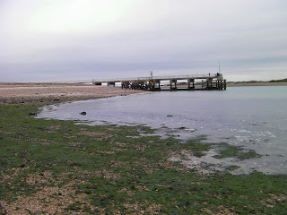 outflow pipe at low tide