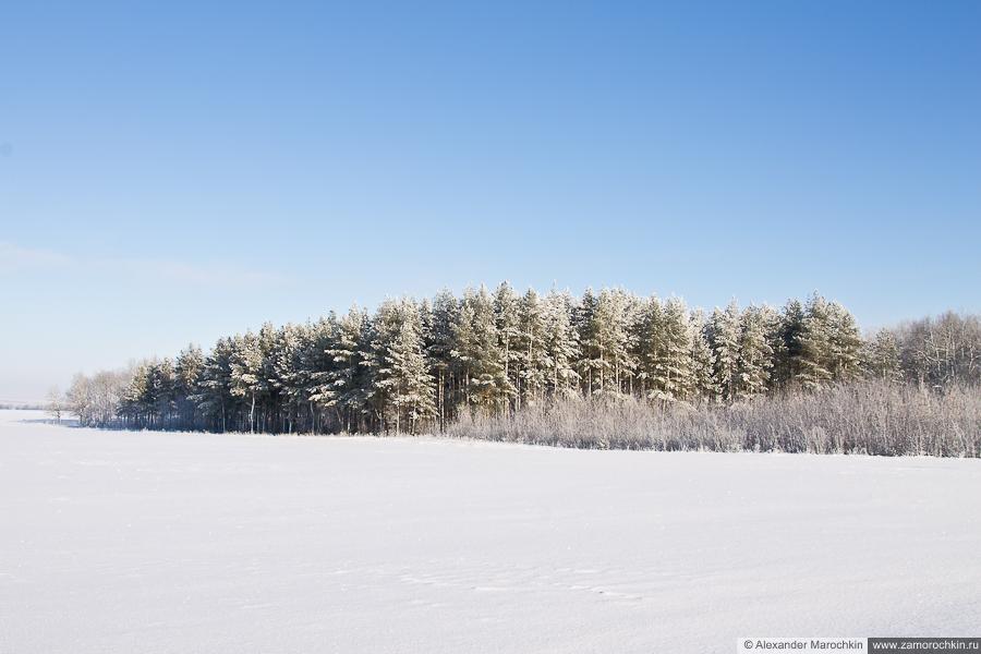 Зимний пейзаж. Опушка леса | Winter landscape. Forest edges