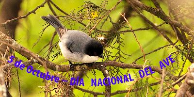 Resultado de imagen para Día Nacional del Ave