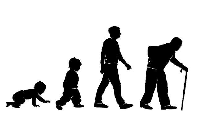 بحث حول مراحل النمو عند الانسان