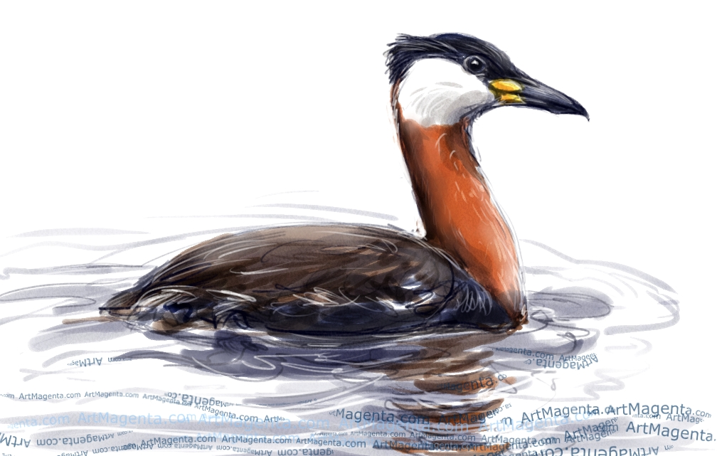 Red-necked Grebe sketch painting. Bird art drawing by illustrator Artmagenta.