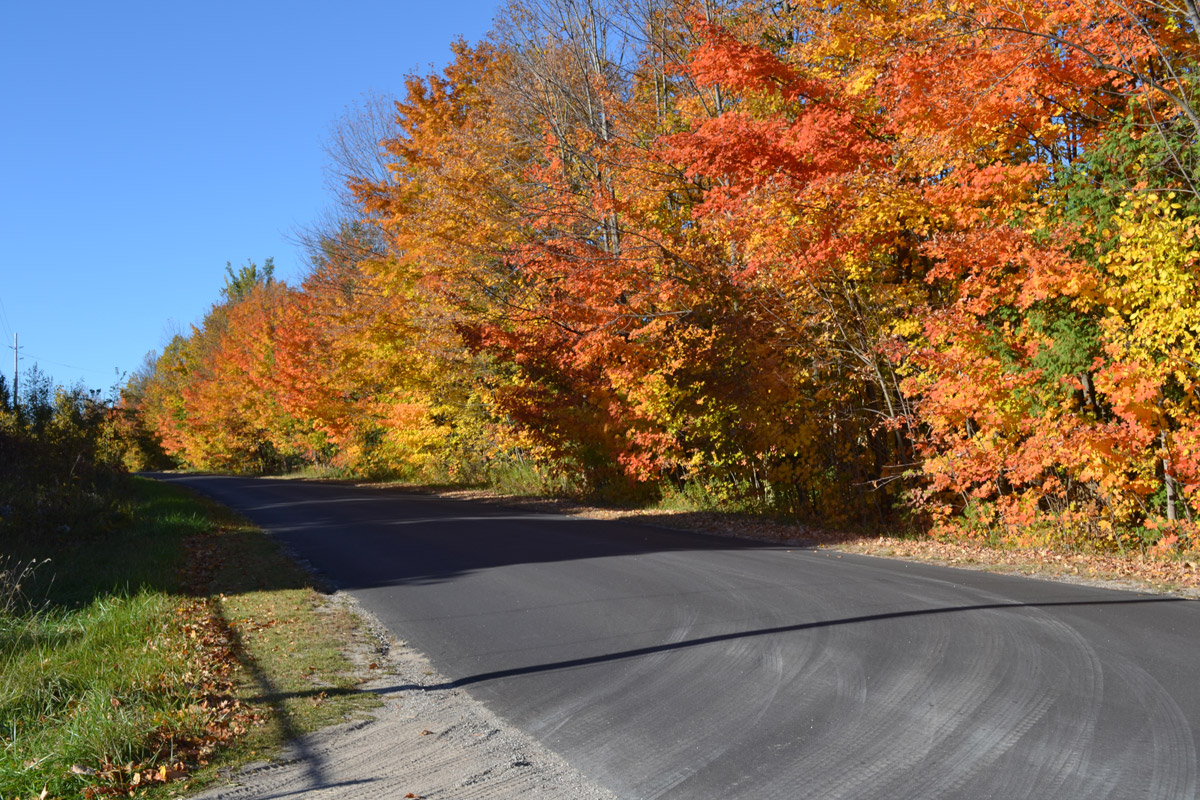 A row of trees along a paved country road, dressed in bright fall colours.