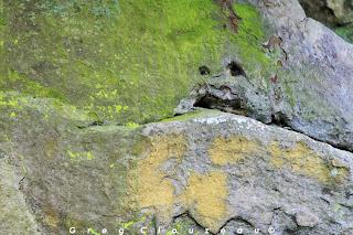 Bonhomme vert, Fontainebleau
