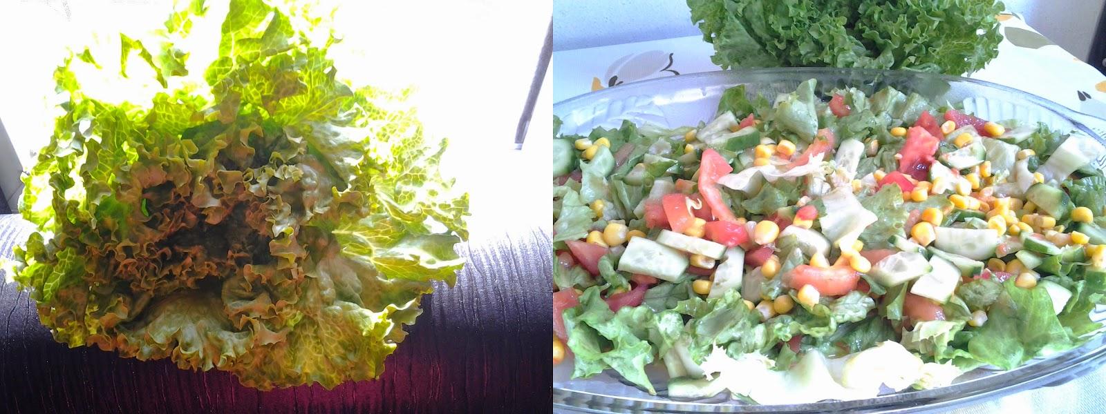 kıvırcık salata nasıl yapılır