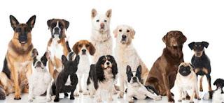 Realizará Michoacán feria de adopción de mascotas