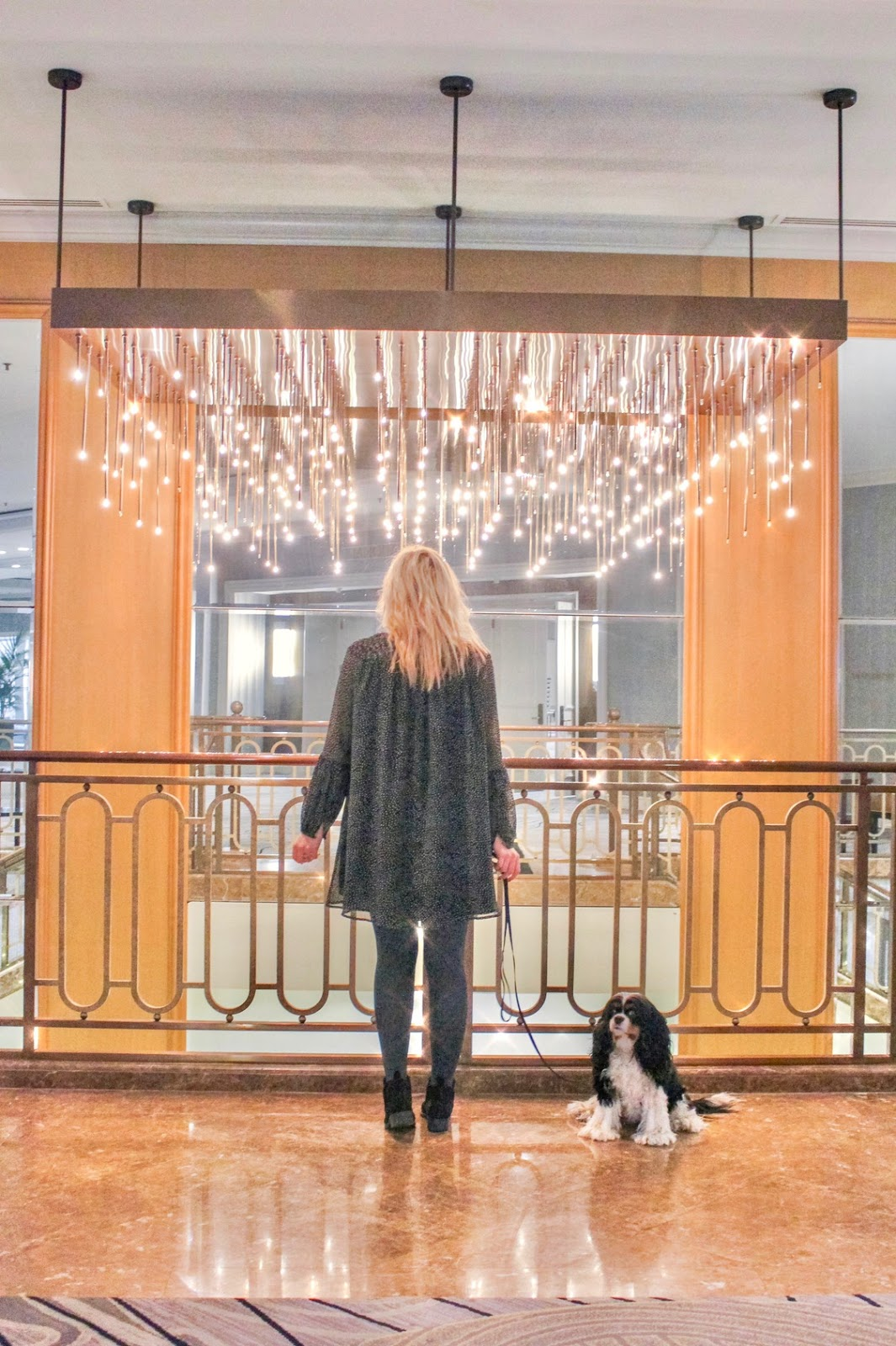Where to Stay in Chicago, Fairmont Chicago Review - Pet Friendly Hotel - Cavalier King Charles Spaniel Puppy