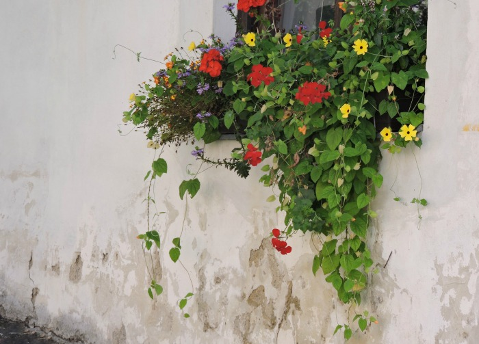 C mo decorar una ventana con plantas guia de jardin for Ideas para decorar jardineras