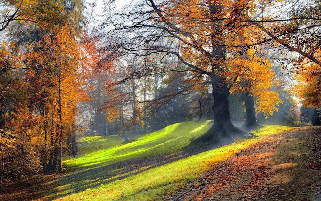 Herfst achtergrond met bomen in een park