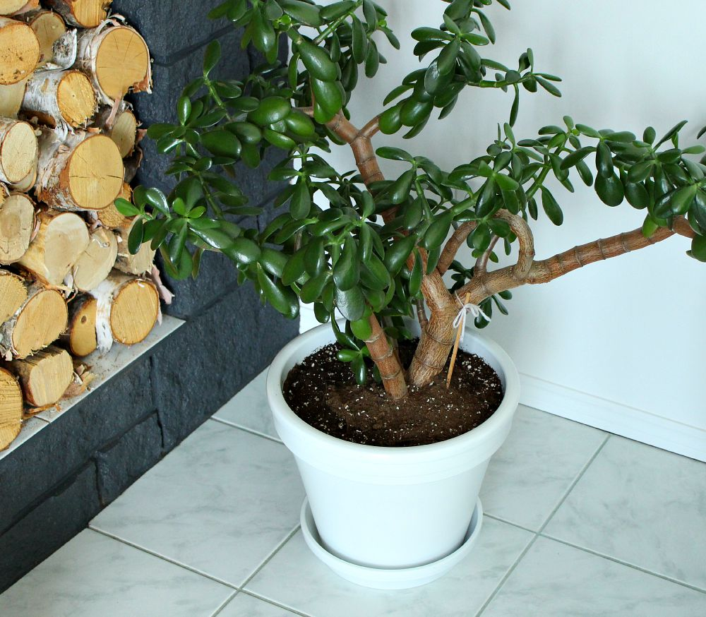 Spray paint a terracotta planter