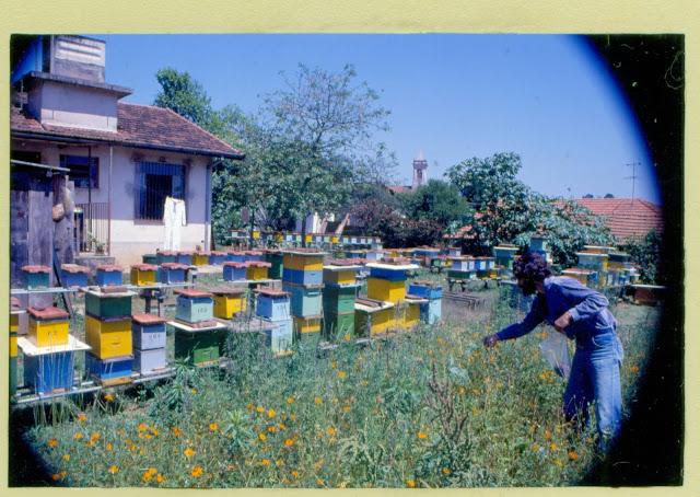 Όταν η παγκόσμια μελισσοκομία υποκλίνεται μπροστά σε έναν Έλληνα!!!