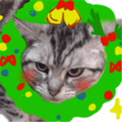 Cat Christmas and New year,Year end