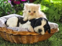 poemas+dia+animal+mascotas+perros+gatos+cachorros
