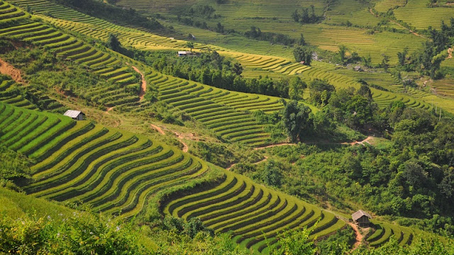 3 Incredible Terrace Fields In Vietnam