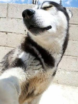 nhung thu cung de thuong selfie-10