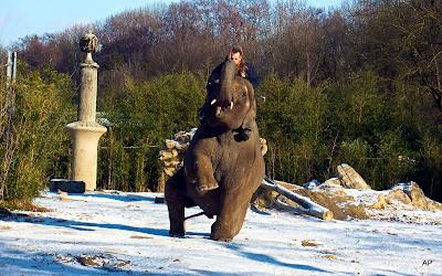 Tresura słoni
