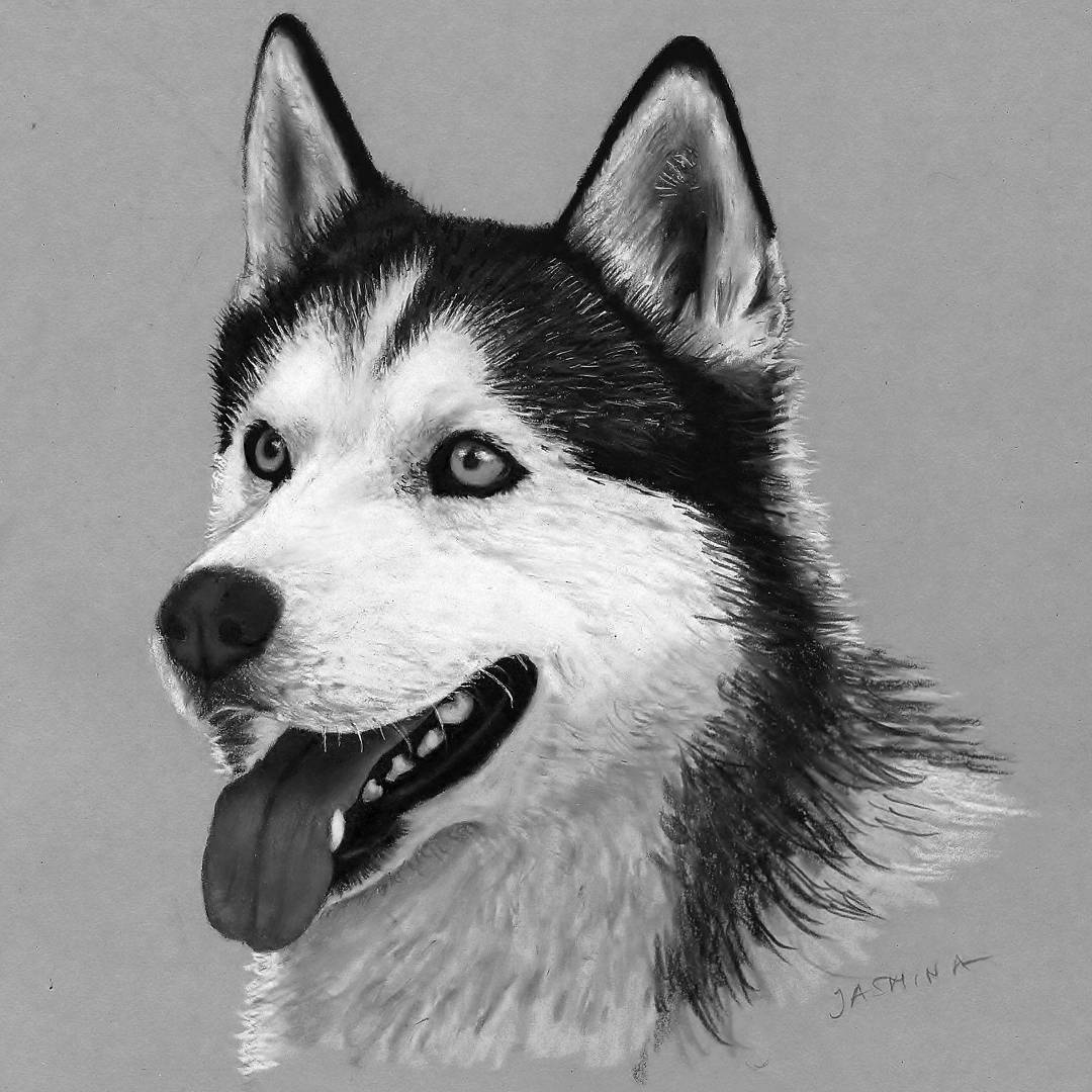 06-Siberian-Husky-Jasmina-Susak-Realistic-Animal-Drawings-with-Colored-Pencils-www-designstack-co