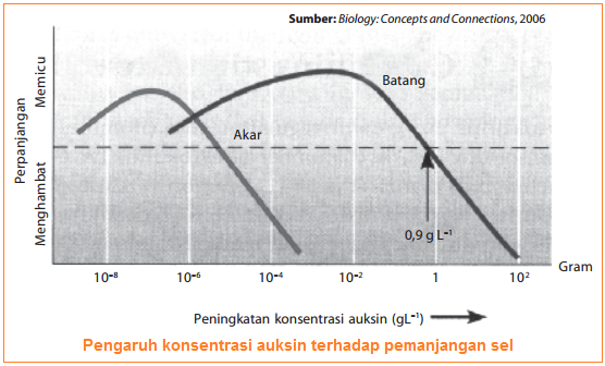 Fungsi hormon auksin pada pertumbuhan tumbuhan