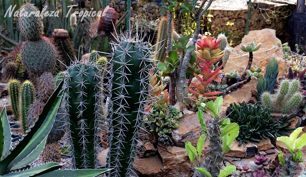 Naturaleza tropical c mo hacer un xerojard n o jard n for Jardin o jardin