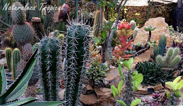 Naturaleza tropical c mo hacer un xerojard n o jard n for Plantas y jardines