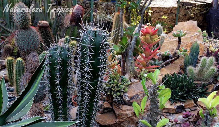 Xerojardín o jardín xerófilo con cactus y suculentas