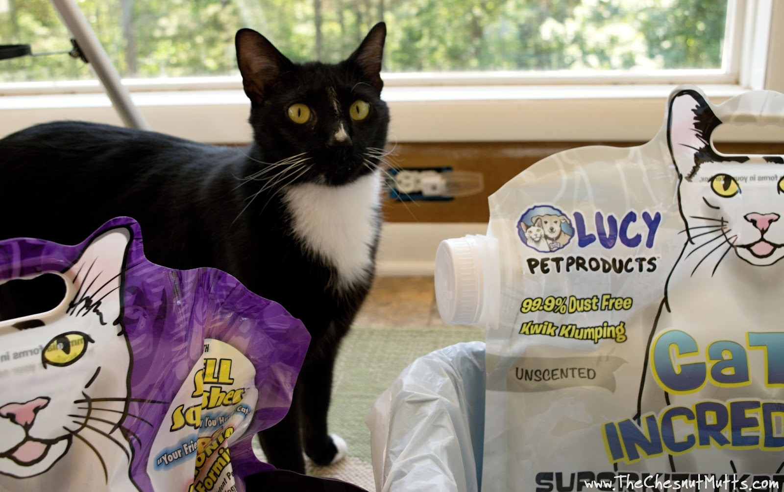 Review Amp Giveaway What Makes Lucy Pet Products Cats Incredible Cat Litter