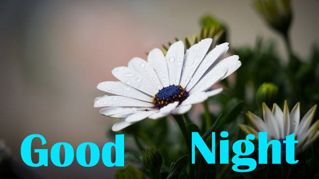 Good Night Wishes With flowers images