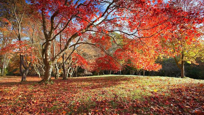 Wallpaper: Nature Autumn colors Leaves Trees Park