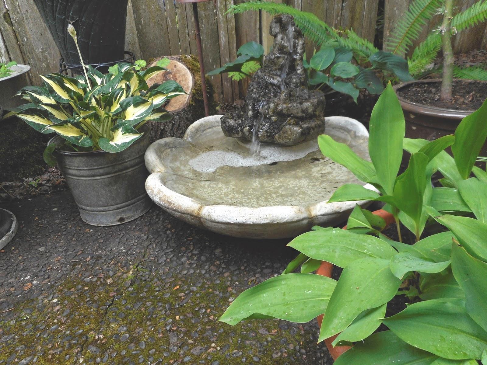 gardening with grace random garden photos