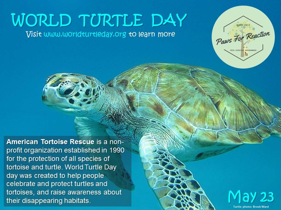 #WorldTurtleDay is #May23 #AmericanTortoiseRescue - Paperblog