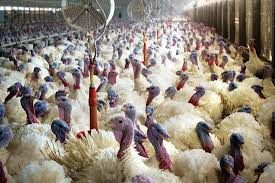 Federal Government Alerts, On Outbreak Of Bird Flu In 7 States And FCT