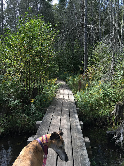 Beaver Island, vacation, boardwalk, woods, nature, greyhounds, Anne Butera, My Giant Strawberry