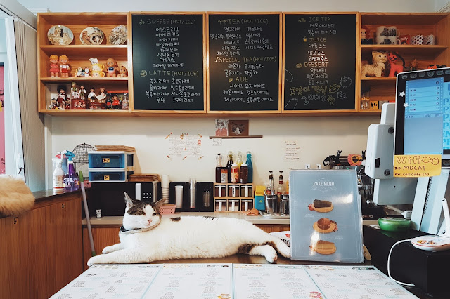 Myeongdong Cat Cafe, Myeongdong(명동)