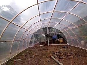 Trik Sederhana Pembuatan Green House, Tanpa Banyak Mengeluarkan Dana