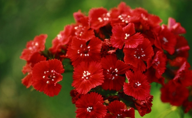 Red Flower Names